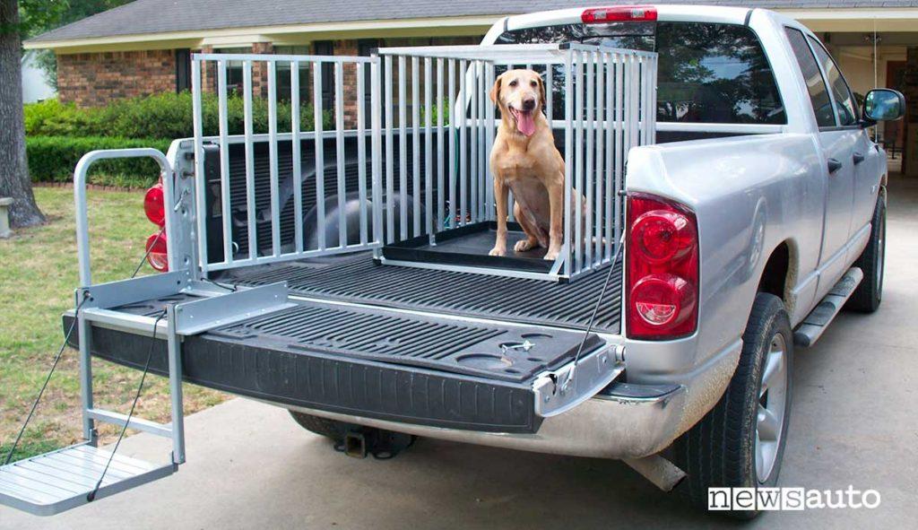 Trasporto cane su pick up autocarro N1
