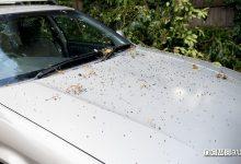 Photo of Come rimuovere la resina dalla carrozzeria dell'auto, consigli e prodotti